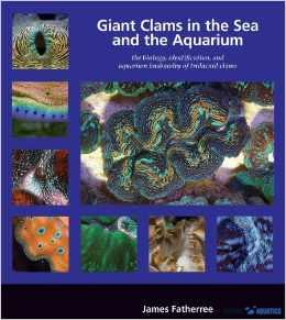 Giant Clams in the sea & aquarium
